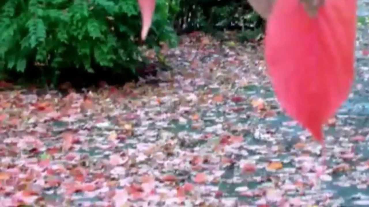 """Gedicht""""Die Blätter fallen"""" von Rilke YouTube ~ 01120309_Blätter Von Sukkulenten Fallen Ab"""