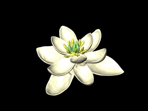 The FIRST FLOWER in History! This is The ANCESTOR Of All Flowers Looked Like?