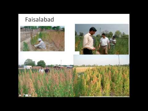 Quinoa: A New Resilient Crop for Food Insecure Climate Prone Pakistan