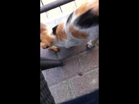 Bird Hardly Escapes Cat Attack