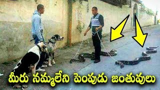 MOST UNUSUAL PETS IN THE WORLD || TTalks