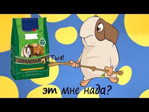 Вопрос: Как приготовить корм для угощения морских свинок?