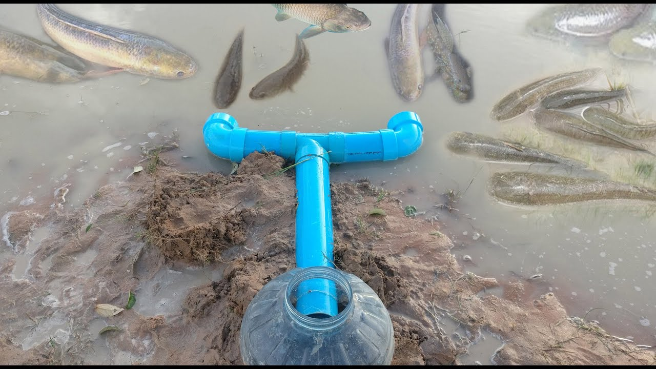Amazing pvc pipe plastic bottle fish trap youtube for Homemade fish traps
