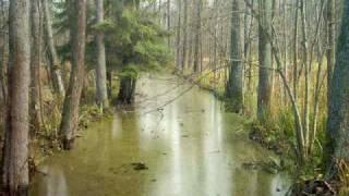 Puszcza Białowieska-Jesień