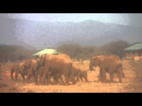 Elefanten Familie laufen zum Wasserloch im Tsavo-East-Nationalpark - Ngutuni Safari Lodge (Kenia)