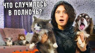 В доме что то не так Миллион мух Кого видит кошка Собаки лают животные ведут себя странно