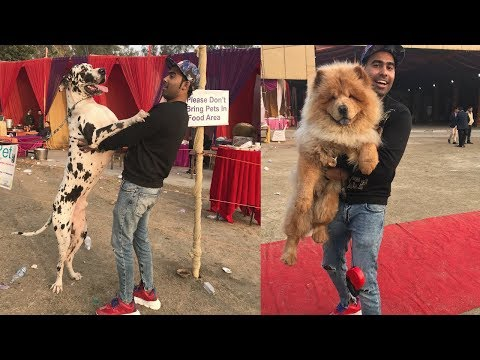 International Dog Show - 1st Time In India😱