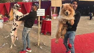 Download International Dog Show - 1st Time In India😱 Mp3 and Videos