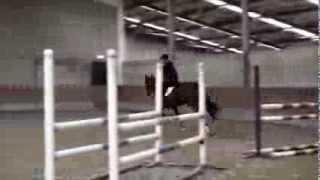 6 yo mare by Unaniem