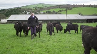 Origin Green Sustainable Beef Farming and the Bord Bia Sustainable Beef & Lamb Assurance Scheme