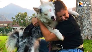 Deaf And Blind Dog Knows Special Language  | The Dodo