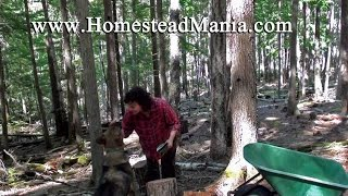 Collecting Firewood:  A Day In The Life Of A Homesteader, Best Wood Stove Wood