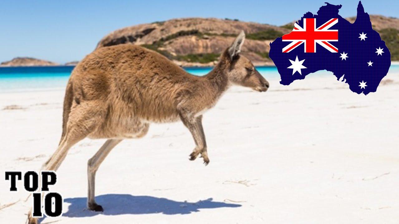 how to make australian iowaka