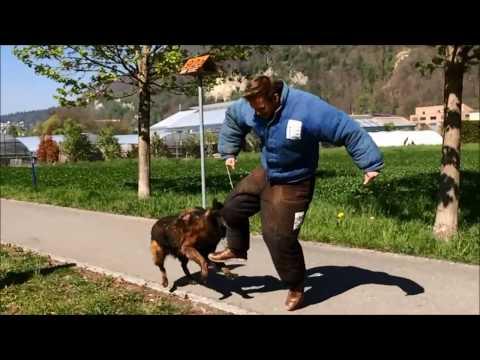 Radio Liechtenstein Reportage Schutzhund