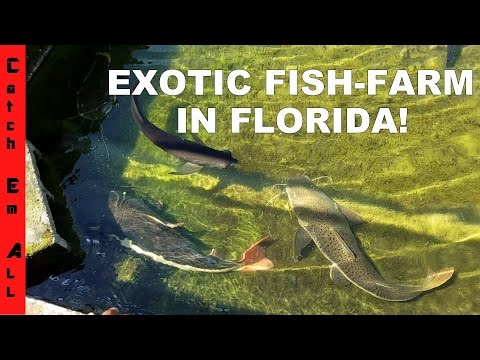 EXOTIC FISH FARM In USA: Monster REDTAIL CATFISH, PACU, And AROWANNA In MIAMI!