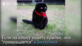 Легко ли быть черной кошкой?