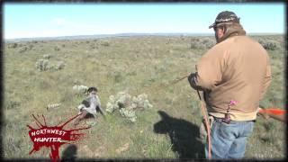 Northwest Hunter - Quicksilver Kennels Dog Training Episode Tease