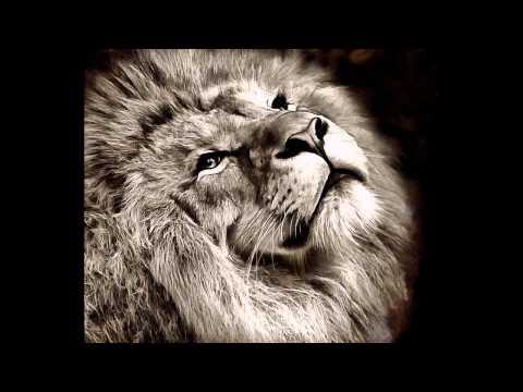 Lion Free Images - Public Domain Images. Stock Free Images. lions
