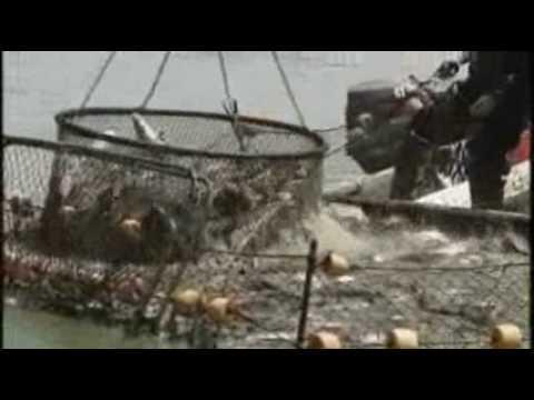 Mississippi Catfish - America's Heartland