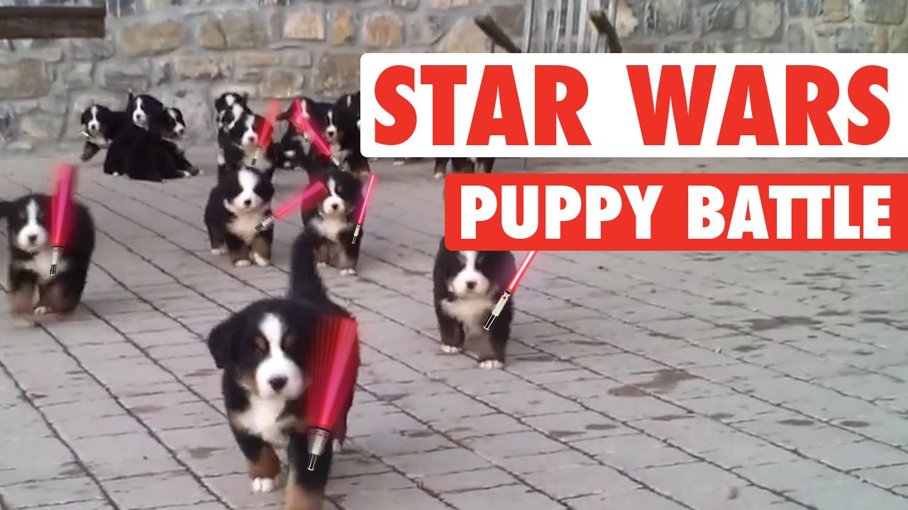 Star Wars: The Force Awakens Puppies Parody || Lightsaber ...