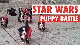 Star Wars: The Force Awakens Puppies Parody || Lightsaber Puppies Battle