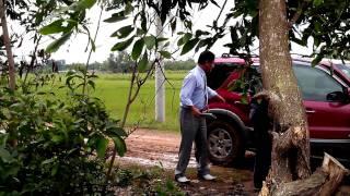 Khai Trương Royal Arowana Farm  phần 2 .