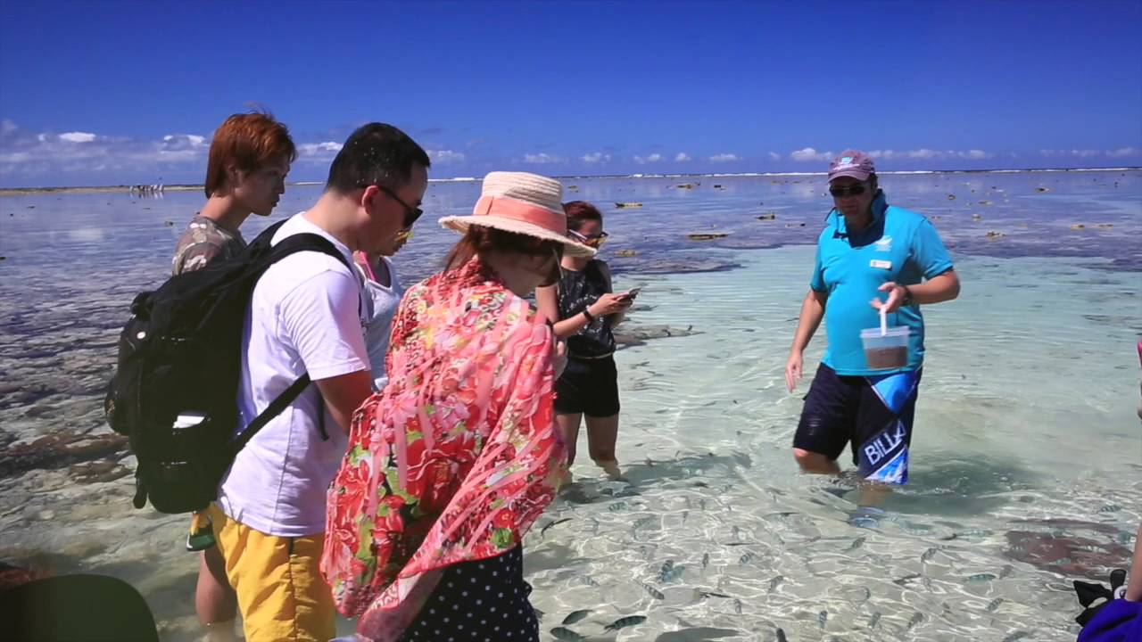 video Lady Elliot Island Day Trip from Gold Coast