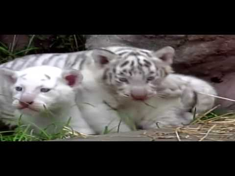 Mother Protect Their Young Bear | Animal Instinct Episode 11