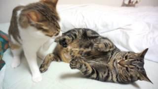 猫 喧嘩.