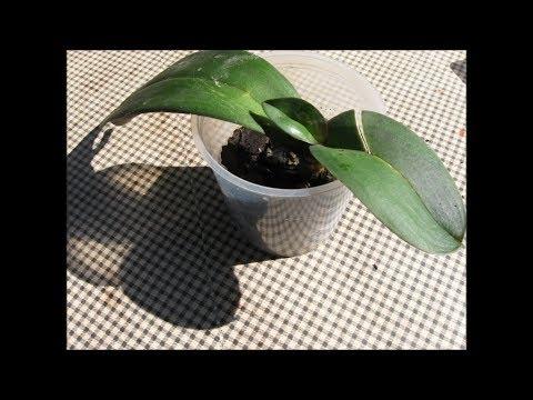 Как ухаживать за орхидеей в домашних условиях: полезные советы