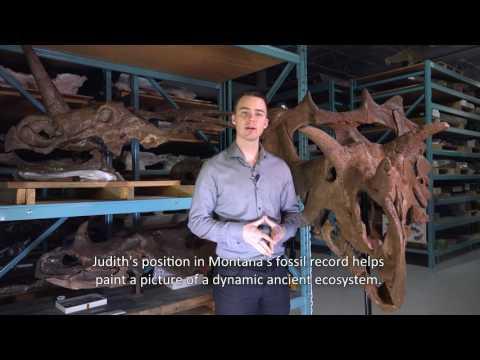 Bigger Picture: The Judith Specimen and Horned-Dinosaur Evolution