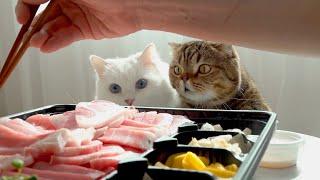 고양이들 앞에서 참치회를 먹어봤습니다!