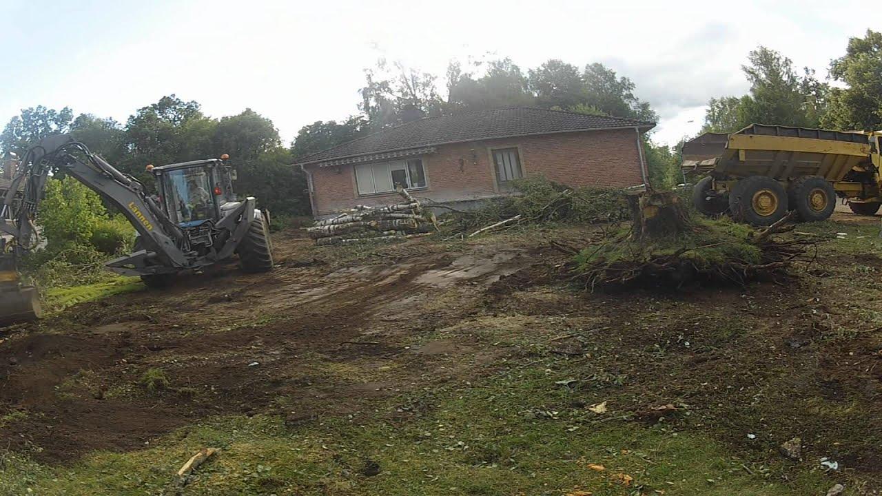 biggest stump