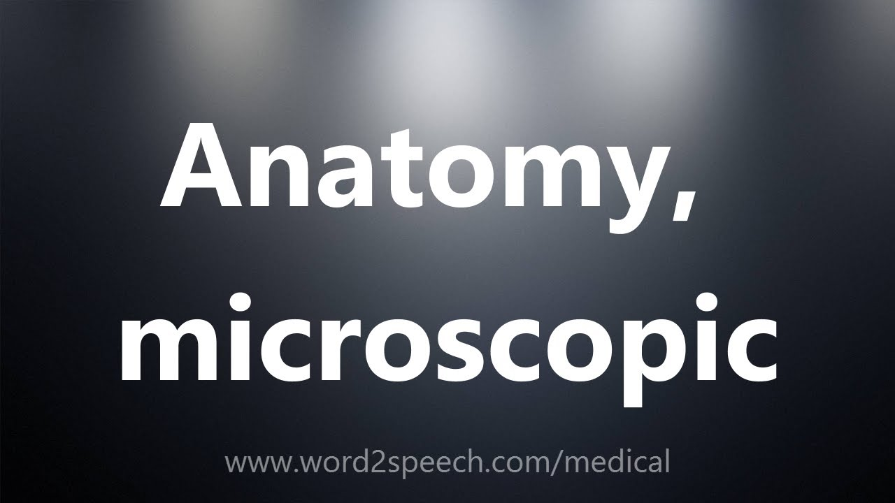 Anatomy, microscopic - Medical Definition - YouTube