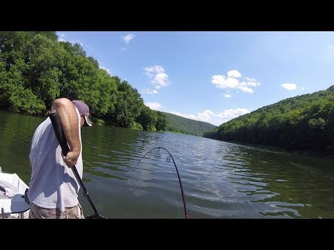 Hooked Up With A Monster Delaware River Catfish!!!
