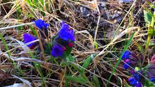 лесные цветы Тюмень
