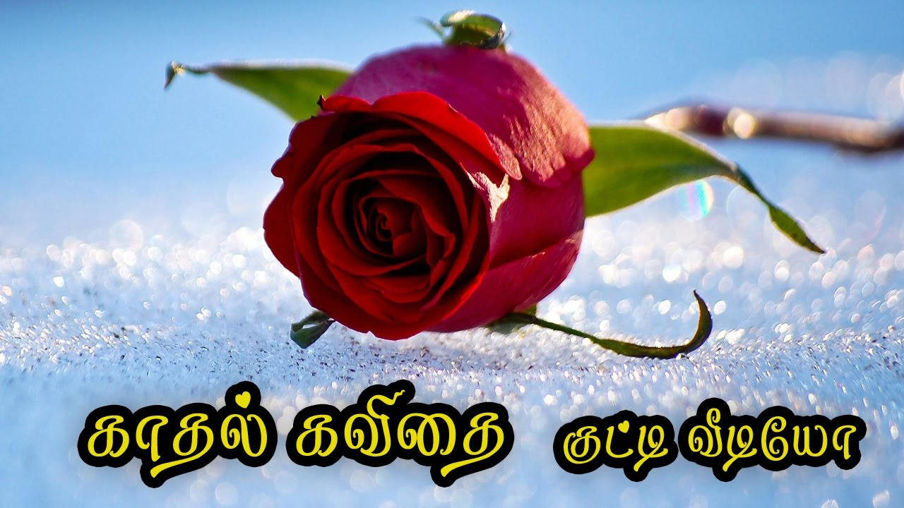 🌹💜 kadhal kavithai tamil video ( Love Quotes in tamil