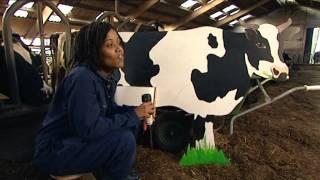 Doen ze dat zo: Hoe melken ze koeien met een melkrobot?   Het Klokhuis