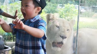 Kids playing with Animals at the Zoo: Fun Elephant with Kids and Cute Animals