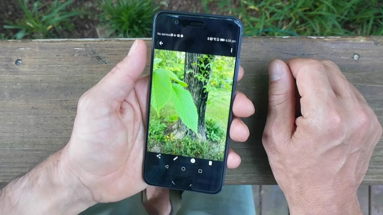 Huawei P10 - Honest Review