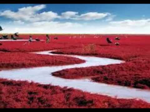 Red Beach of Panjin, China 盤錦紅海灘