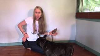 Train My French Bulldog Part 6 Fetch | Dog Training Tutorials