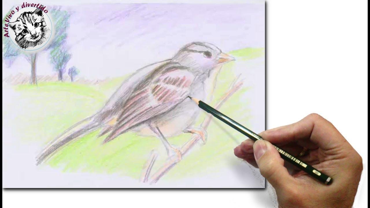 Cómo Dibujar un Pájaro con Lápices de Colores Para Niños - YouTube