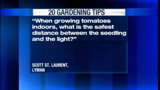 20 Gardening Tips: Gowing tomatoes indoors