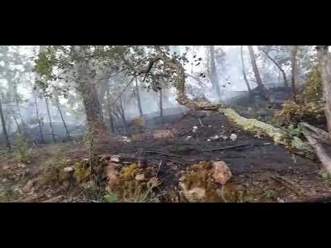 Incendio originado en la proximidad de la carretera OU-540