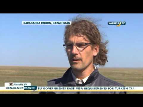 Risk of recurrent Saiga antelopes deaths remains - Kazakh TV
