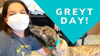 Adopting a Second Greyhound!