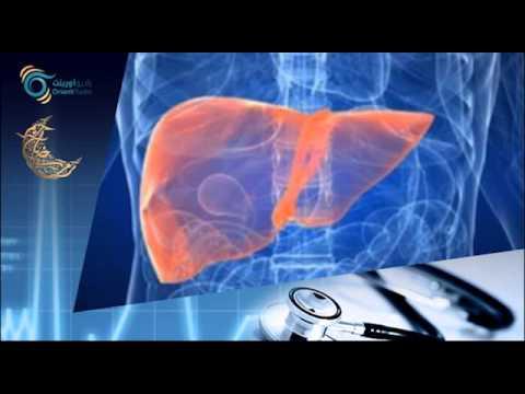 الكبد | أورينت كلينيك