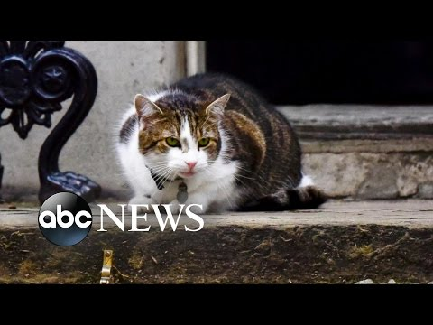 Larry the Cat to Remain at 10 Downing Street