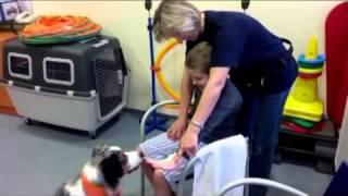 Лечение и реабилитация детей В реабилитации участвуют животные Германия